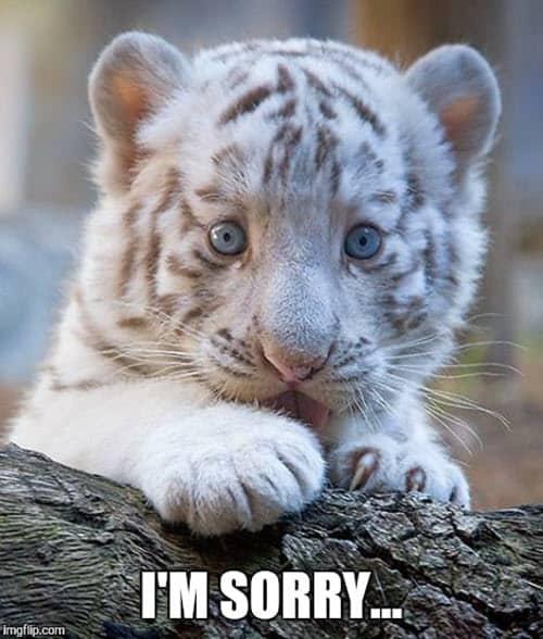 im sorry cub meme