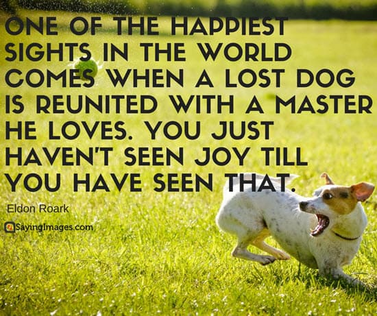 50 Dog Quotes For People Who Love Dogs Sayingimagescom