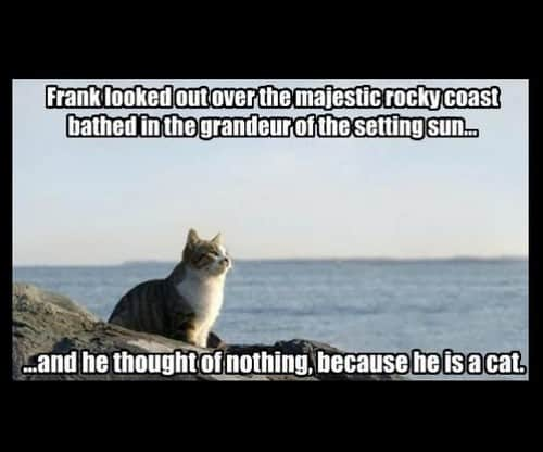inspirational he is a cat memes