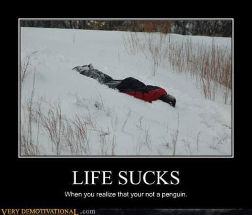 life sucks not a penguin meme