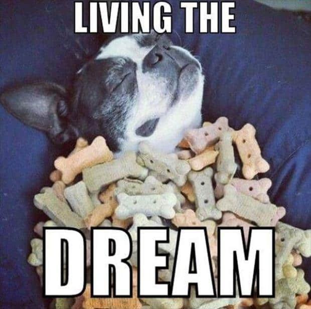 living the dream meme 20 dream memes that will inspire you in a funny way sayingimages com