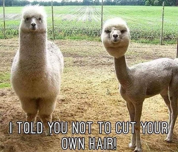 lockdown hair cut memes
