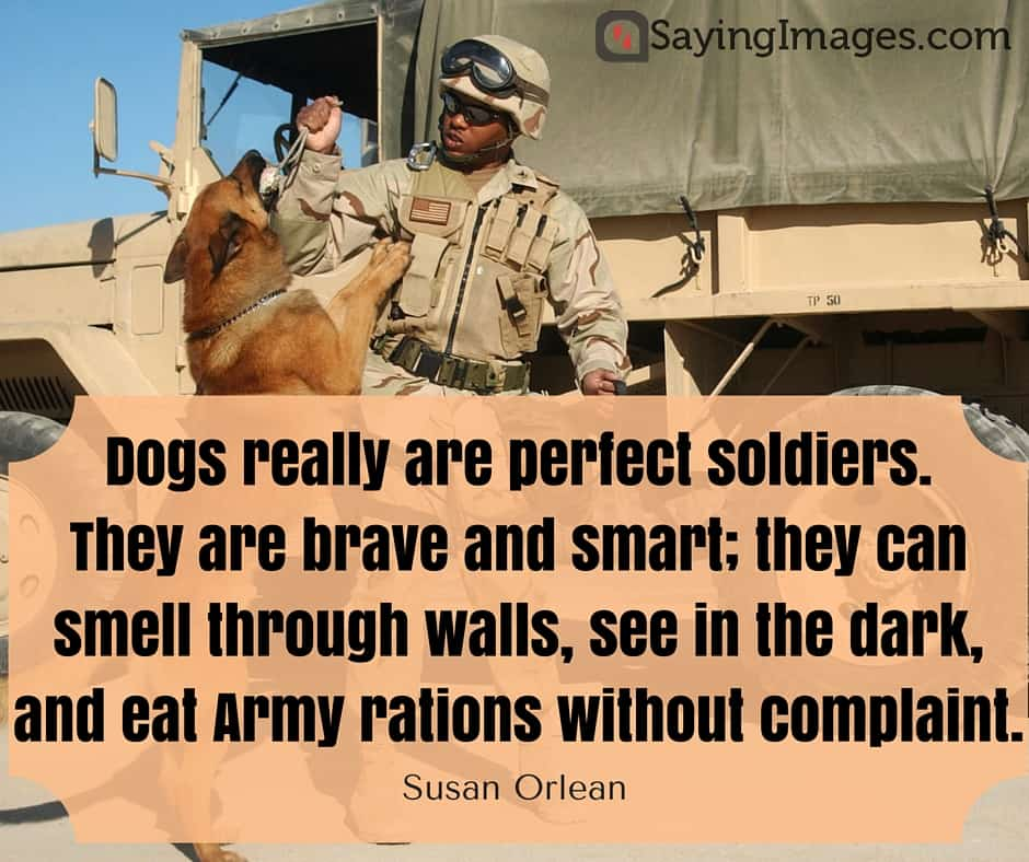 love dog quotes