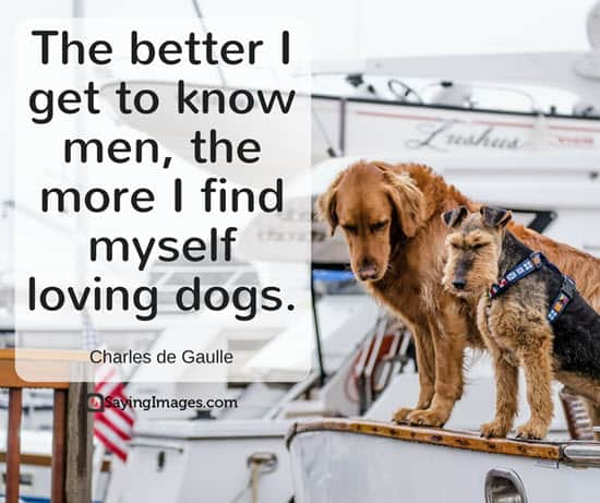 love my dog quotes