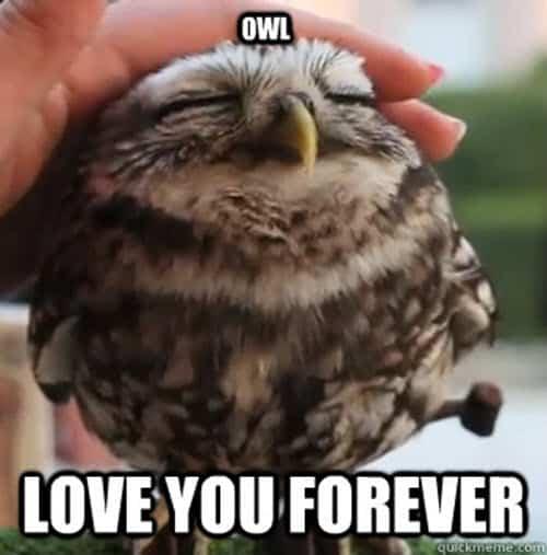 love owl memes