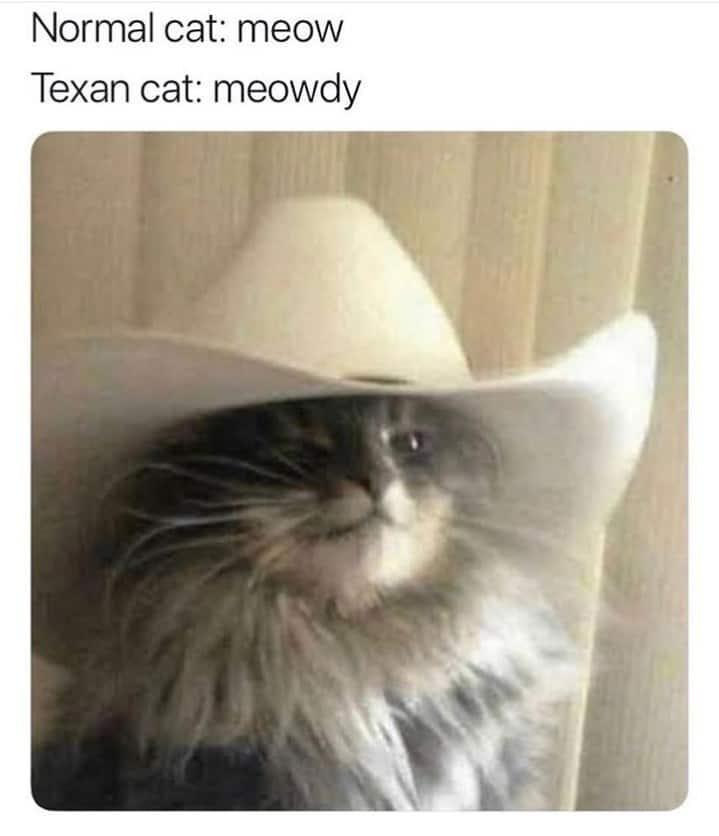 meowdy yeehaw meme