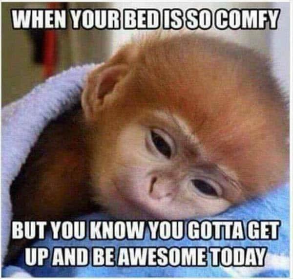 morning bed comfy meme