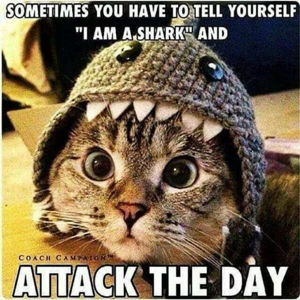 motivational i am a shark memes