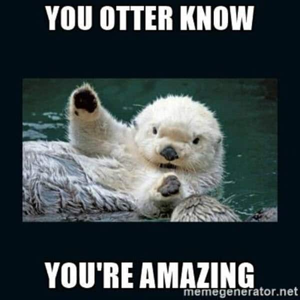 motivational you otter know memes