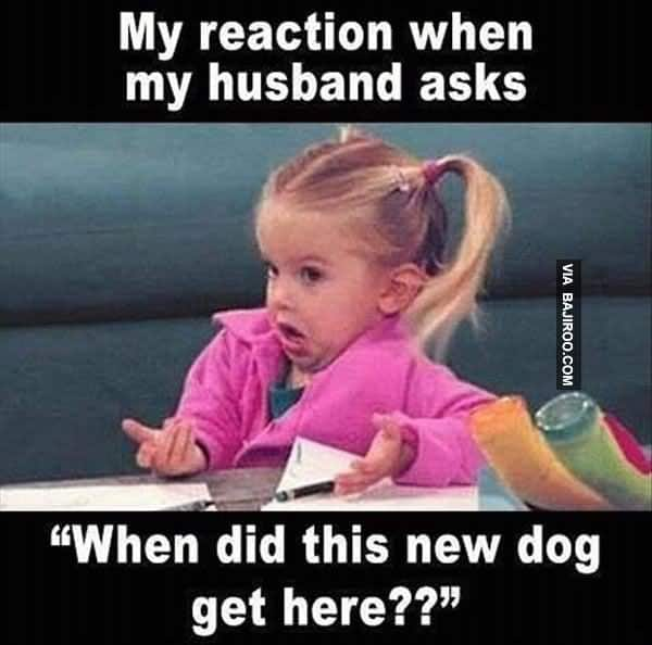 my reaction when my husband asks i love meme 20 cheesy and amusingly funny memes for your husband