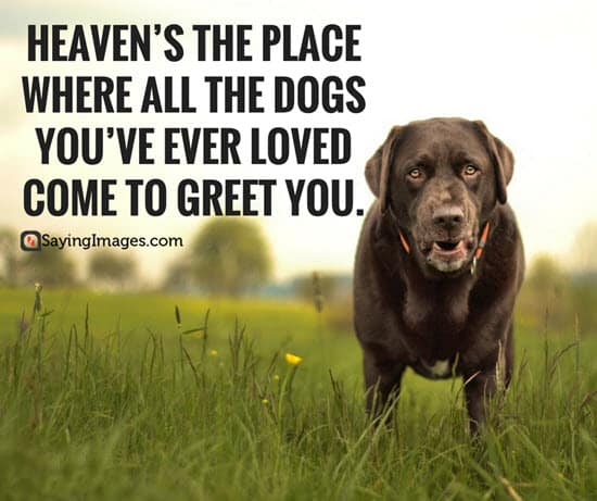 50 Dog Quotes For People Who Love Dogs Sayingimages Com