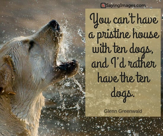 50 Dog Quotes For People Who Love Dogs | SayingImages com