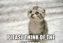 cute cat memes