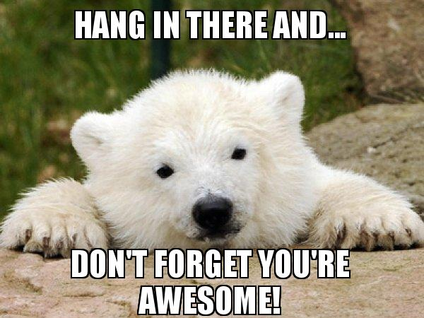60 Hang In There Meme To Motivate You SayingImages Cool Hang In There Quotes