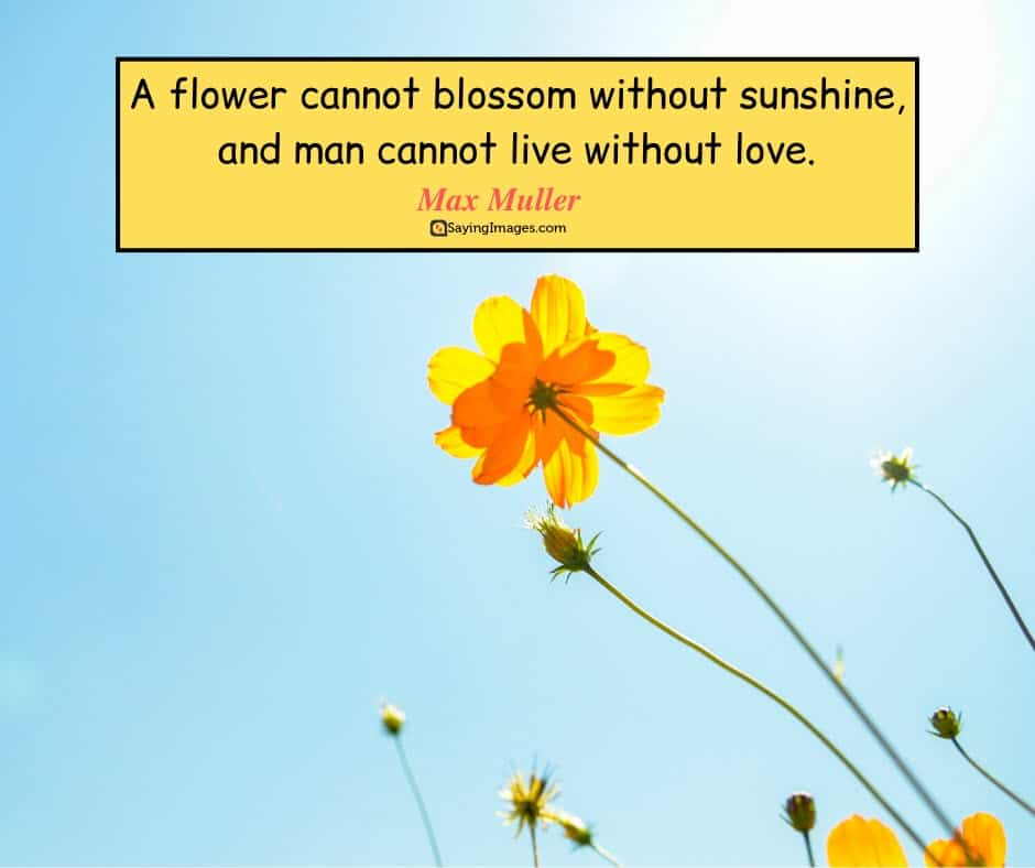quotes about life flower