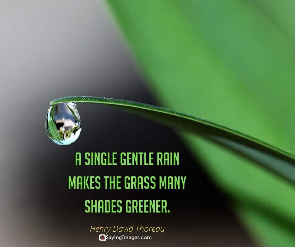 rain green quotes
