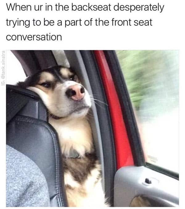 really funny in the backseat memes