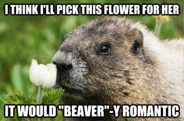 romantic pick this flower memes