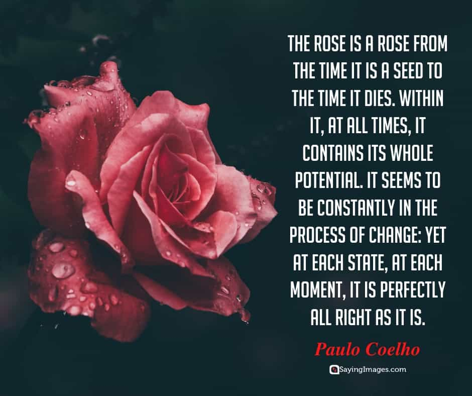35 Amusing Roses Quotes That Celebrate Life's Beauty ...