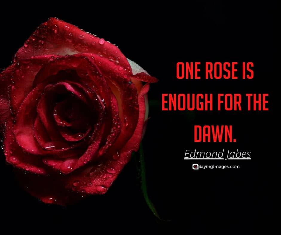 roses dawn quotes
