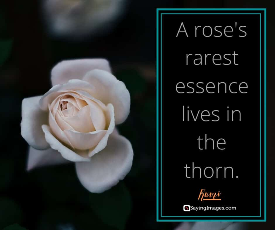 roses essence quotes
