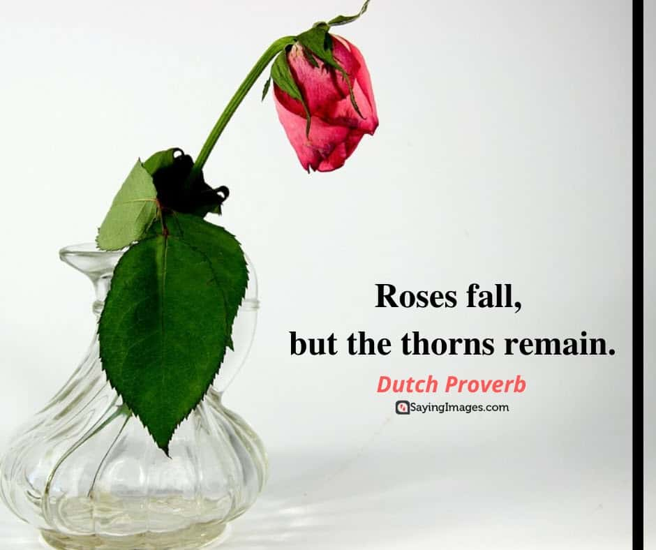 roses fall quotes