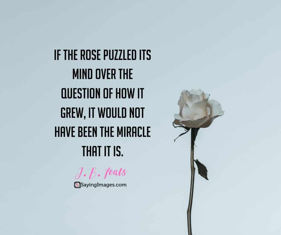 roses miracle quotes