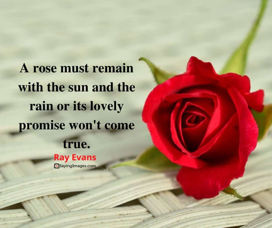 roses promise quotes