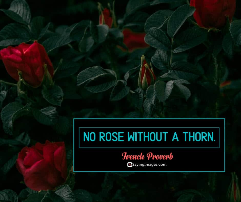 roses thorn quotes