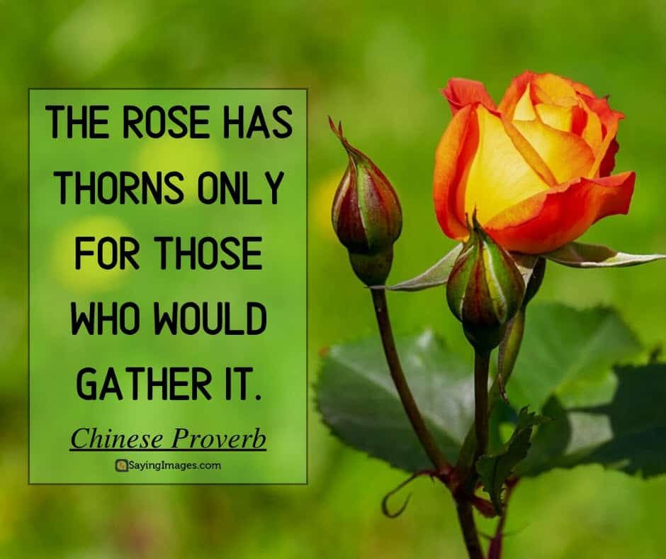 roses thorns quotes