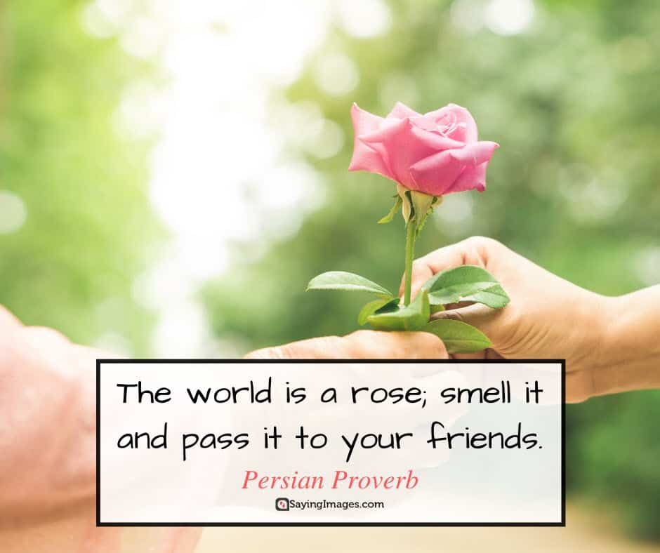 roses world quotes