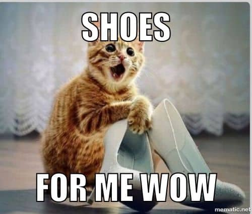20 Cute Cat Memes That Will Put You In A Good Mood Sayingimages Com