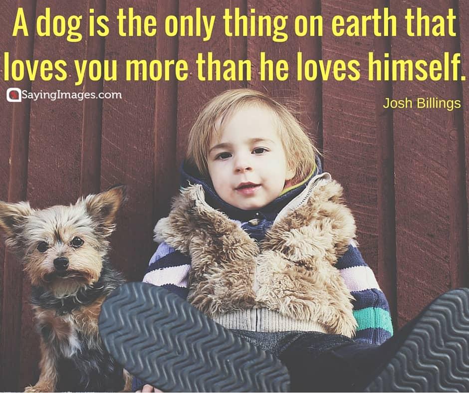 short dog quotes