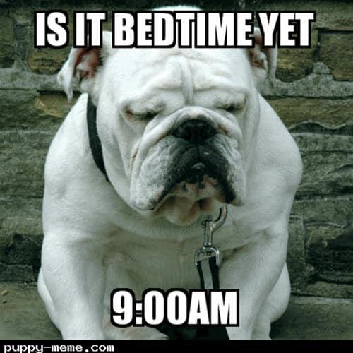 sleepy bedtime meme