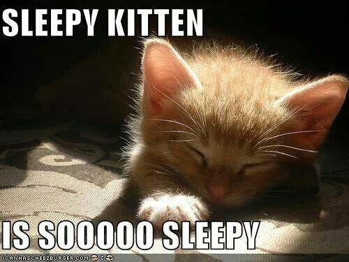 Cat Sleeps On Back On Me