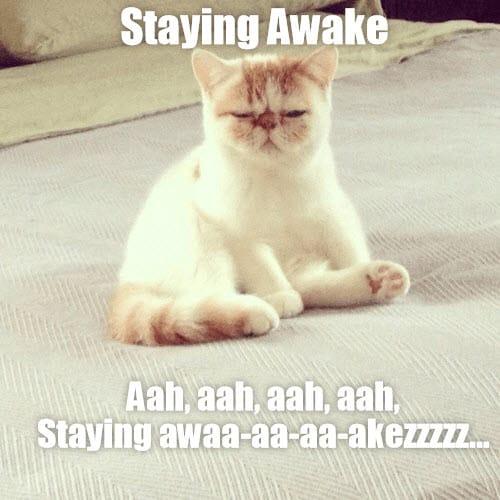 sleepy staying awake meme
