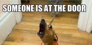 dachshund meme
