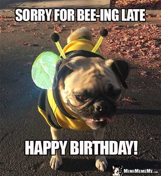 20 Best Happy Belated Birthday Memes Sayingimagescom