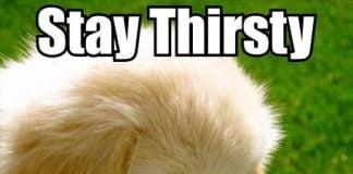 thirsty meme