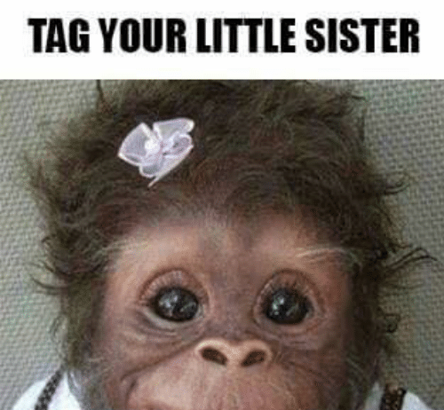 tag your little sister funny meme