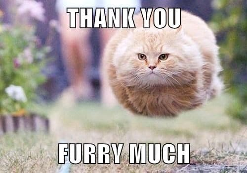 thank you furry much memes