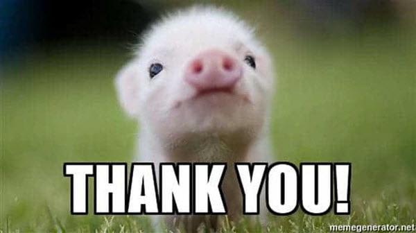 thank you piglet memes
