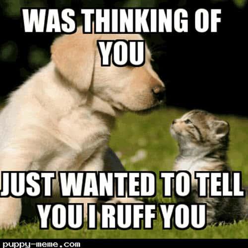 thinking of you i ruff you meme