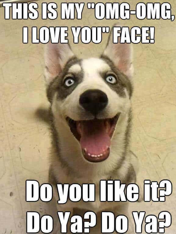 this is my omg omg i love you face do you like it do ya do ya funny memes 20 outrageously funny i love you memes sayingimages com