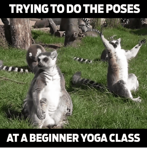 trying to do the poses yoga memes 20 yoga memes that are honestly funny sayingimages com