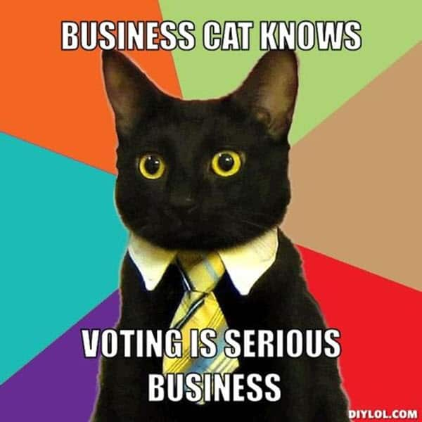 voting business cat meme