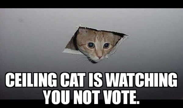 voting ceiling cat meme
