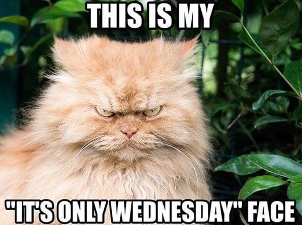 wednesday face meme