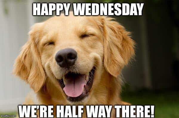 wednesday happy meme
