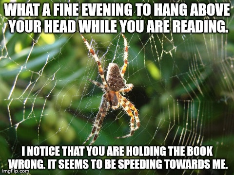 15 Adorable Spider Memes That Will Make Us Laugh The Fear Away